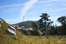 Mount Sutro Forest, San Francisco, United States