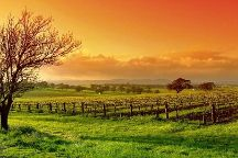 Napa Valley Back Trail Wine Tours