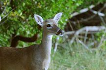 National Key Deer Refuge, Big Pine Key, United States