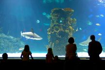 Newport Aquarium, Newport, United States