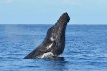 Ocean Sports Whale Watch Adventure, Waikoloa, United States