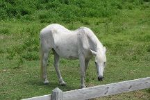 Ocracoke Pony Pens, Ocracoke, United States
