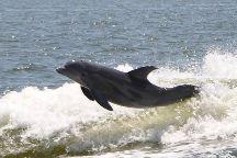 Orange Beach Private Family Dolphin Tours & Boating Safaris