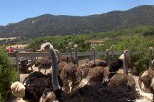 Ostrich Land, Buellton, United States