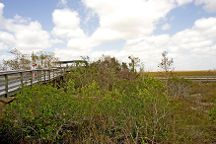 Pa-hay-okee Trail, Everglades National Park, United States