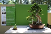 Pacific Bonsai Museum, Federal Way, United States