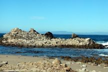Pacific Grove Shoreline Parkway Marine Refuge, Pacific Grove, United States