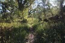 Patagonia-Sonoita Creek Preserve, Patagonia, United States