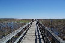Paynes Prairie Preserve State Park, Micanopy, United States