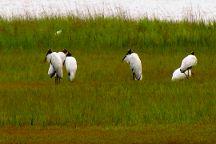Pinckney Island National Wildlife Refuge, Hilton Head, United States