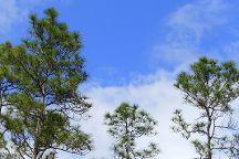 Pineland Trail, Everglades National Park, United States