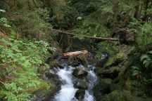 Quinault Rain Forest, Olympic National Park, United States