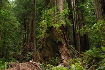 Redwood National Park, Redwood National Park, United States