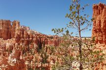 Rim Trail, Bryce Canyon National Park, United States