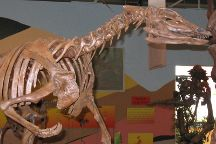 Rocky Mountain Dinosaur Resource Center, Woodland Park, United States
