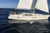Sailing Daffy