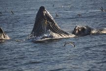 San Francisco Whale Tours, San Francisco, United States