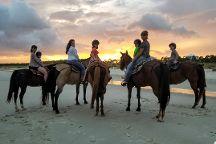 Sand N Spur Snorkeling & Horseback Riding on the Beach