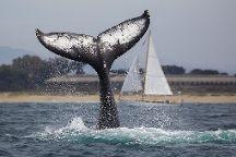 Sea Spirit Ocean Safari