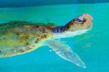 Sea Turtle, Inc., South Padre Island, United States