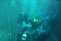 SeaDaddys Manatee Dive Center