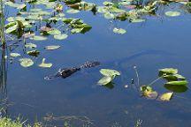 Shark Valley Visitor Center, Everglades National Park, United States