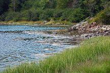 Ship Harbor Nature Trail, Bass Harbor, United States