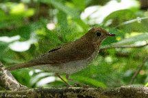 Smith Oaks Bird Sanctuary, High Island, United States