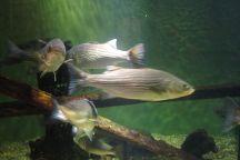 South Carolina Aquarium, Charleston, United States