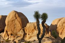 Split Rock, Joshua Tree National Park, United States