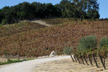 Tablas Creek Vineyard, Paso Robles, United States