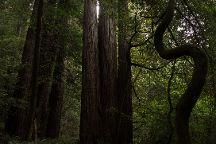 Tall Trees Grove, Redwood National Park, United States