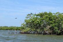 Ten Thousand Islands  National Wildlife Refuge, Immokalee, United States