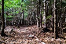 The Gorge Path, Acadia National Park, United States