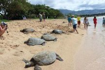 Turtle Tours Oahu