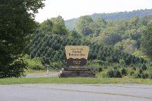 Virginia Creeper National Recreation Trail, Abingdon, United States