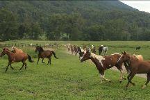 Walden Creek Horseback Riding Stables