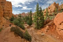 Wall Street, Bryce Canyon National Park, United States