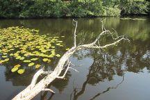 Wellfleet Bay Wildlife Sanctuary, Wellfleet, United States