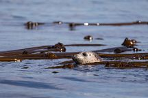 Western Prince Whale Watching & Wildlife Tours, Friday Harbor, United States