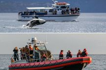 Western Prince Whale Watching & Wildlife Tours