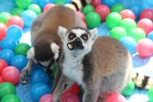 Wildlife Survival Sanctuary, Spring Hill, United States