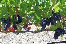 Wine Country Journeys LLC