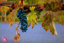 Winery Tours Walla Walla