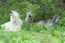 Wolf Conservation Center, South Salem, United States