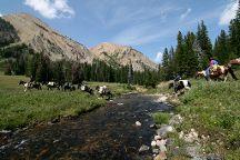 Yellowstone Mountain Guides Day Tours