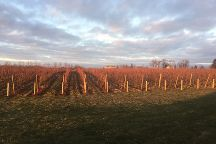 Zugibe Vineyards, Geneva, United States
