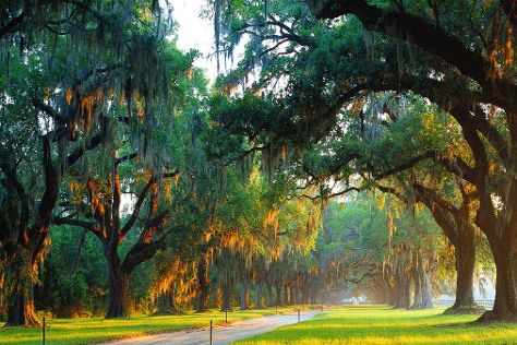 Boone Hall Plantation, Mount Pleasant, United States
