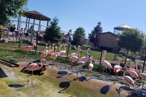 Boulder Ridge Wild Animal Park, Alto, United States