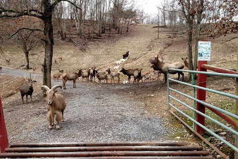 Briarwood Ranch Safari Park, Morristown, United States